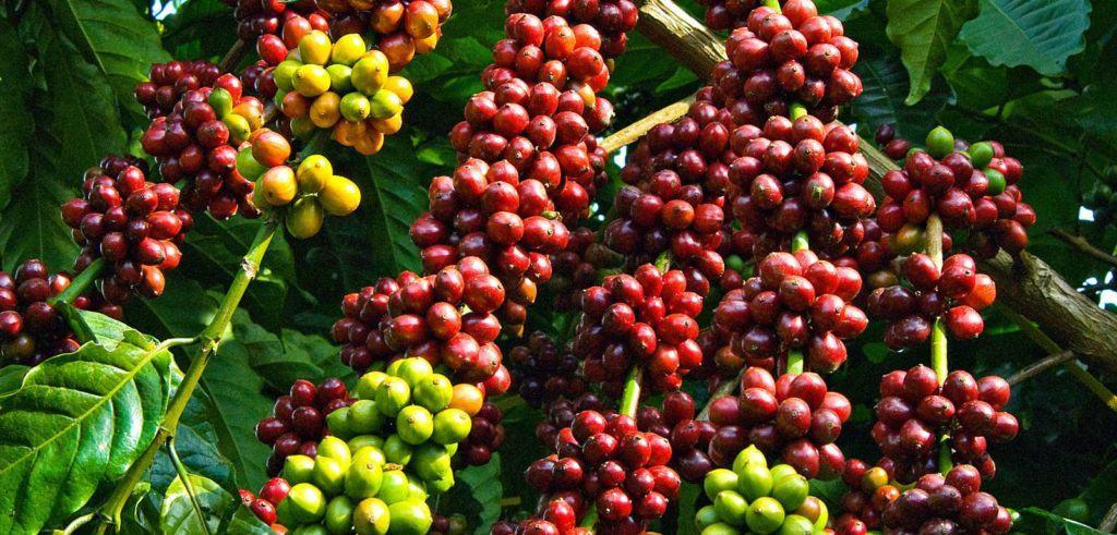 kinh doanh cafe viet - MUỐN THÀNH CÔNG HÃY ĐẦU TƯ NGAY VÀO CÔNG NGHỆ THÔNG TIN VÀ NÔNG NGHIỆP!